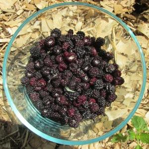 black raspberries 004