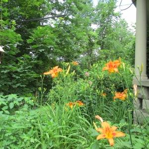 flowers 128