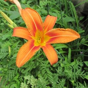 flowers 129