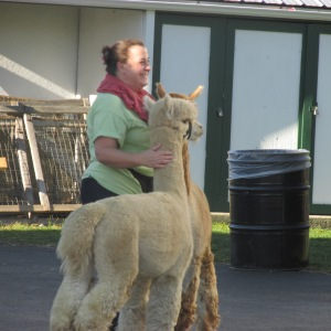 THESE TWO ALPACAS ARE SO CUTE