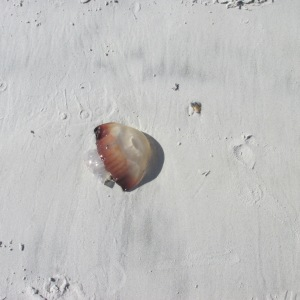 THERE WERE JELLY FISH WASHED UP ON SHORE