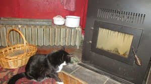 SAMMY IS WONDERING WHEN THE PELLET STOVE WILL BE TURNED ON!