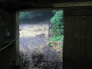 LOOKING THROUGH THE BARN DOOR
