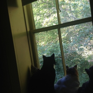 Sammy watching the birds with the draft dodger stuffed cats