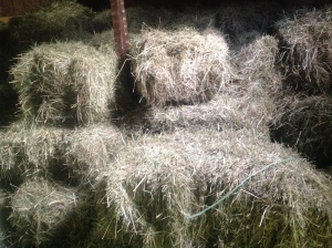 It's a good feeling to have a barn full of hay.