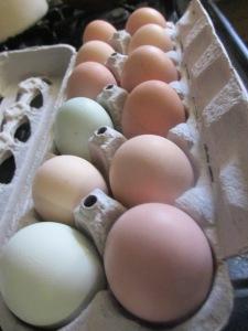 lots of wonderful eggs