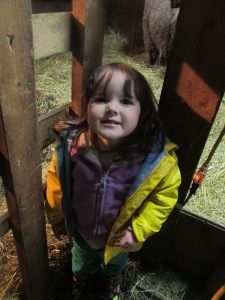 Lil had a wonderful time at shearing day