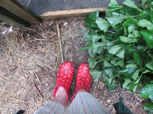 Croc's won't do in this weather