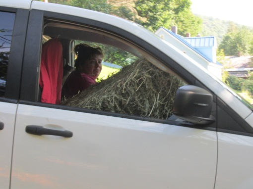 Cindy with a bale on the front seat