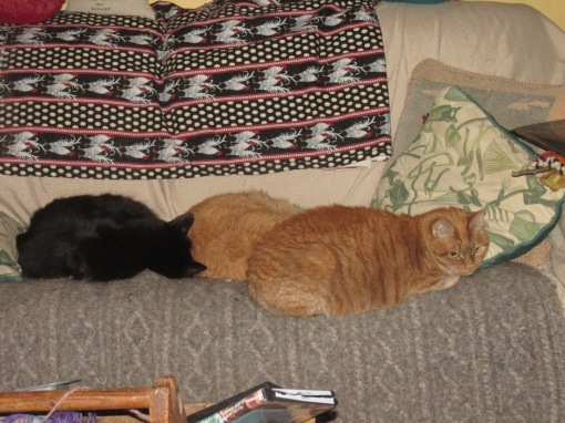 Willie the elusive Baby and Shorty resting on the sofa